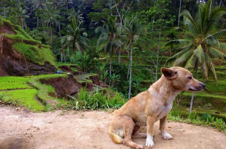 Animals Are Being Abandoned in Bali and Left To Starve