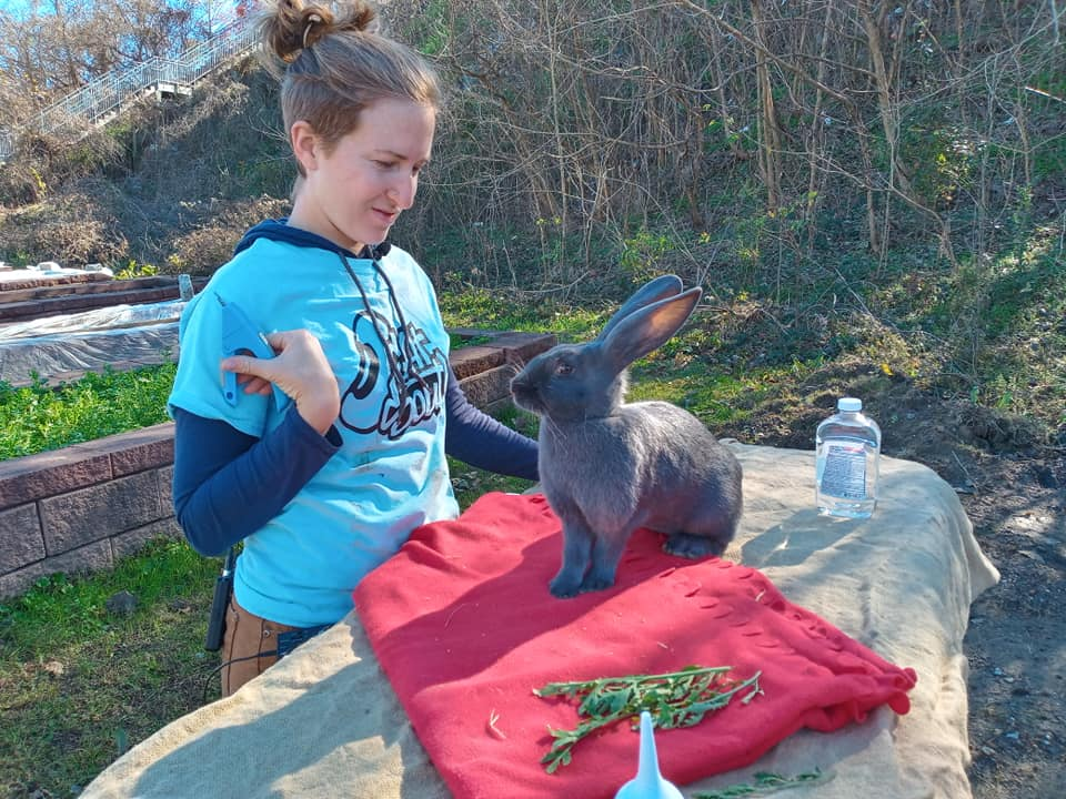 Teaching Bunny At Eat South