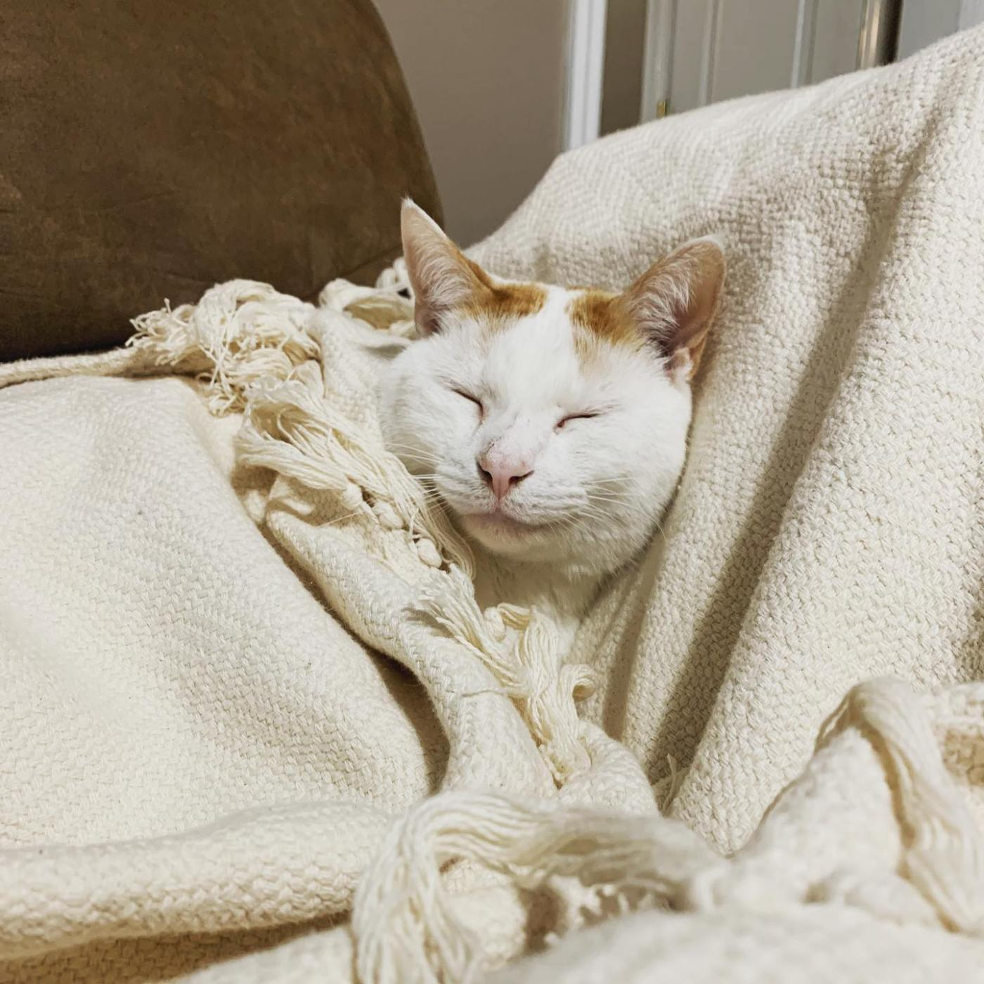 Happy Cat Snuggled In Red Land Cotton