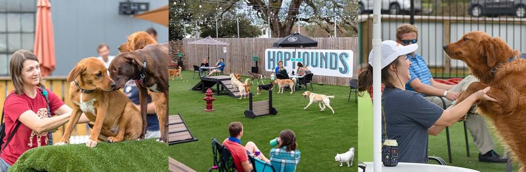 Playground @ Hop Hounds