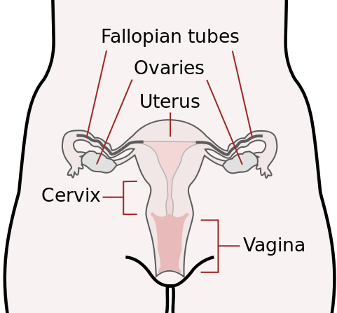 A Brief History of Feminist Vagina Obsession