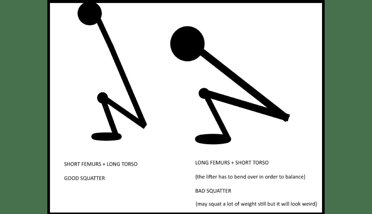 Squat anthropometrics