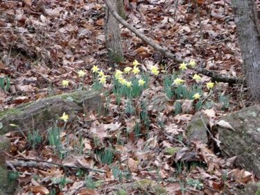 springblooms.JPG