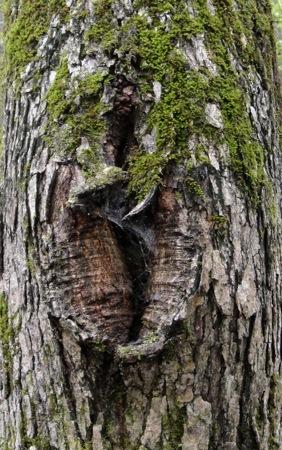 treeimperfection.jpg