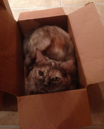 Pippinthebox