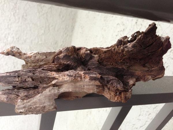 Treetreasure2
