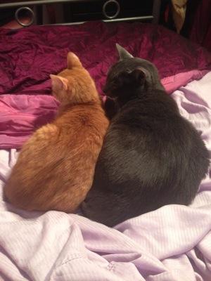 Bedmates2
