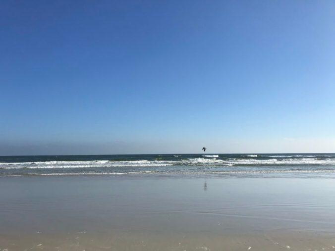blue sky over beach and a black bird