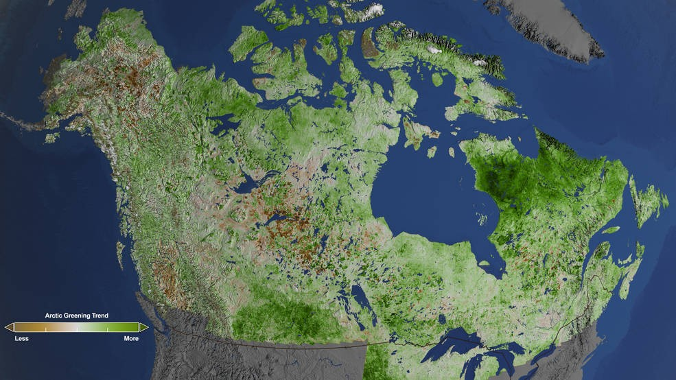 Commencing north of the foothills and parkland natural region, the boreal forest of alberta expands from the city of edmonton to the most northern reaches of the province, and outlines most of the western and eastern provincial borders. Greening Of Arctic Browning Of Boreal Forest The Independent Barents Observer