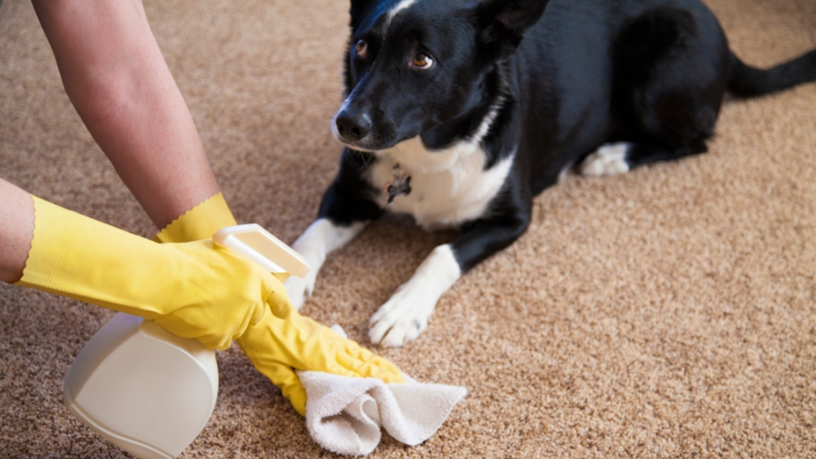 Clean Carpet Pet Stains Naturally