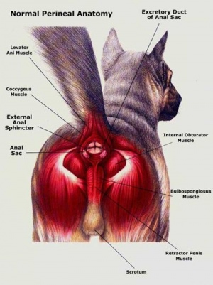 cat neck muscles diagram example of functional decomposition vet advice: dog scooting | the bark