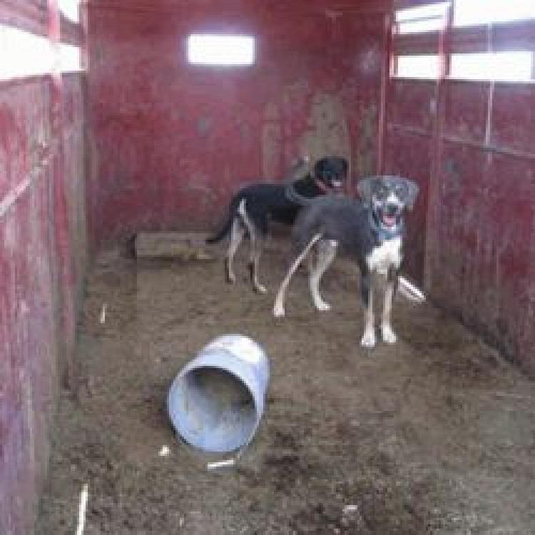 Helping Farm Dogs Loophole Cruelty Bark