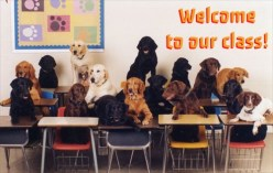 Welcome to The Bark Academy