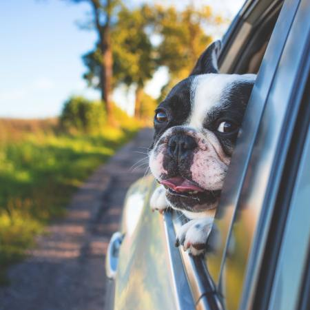 Vehicle Safety Supplies for Dogs