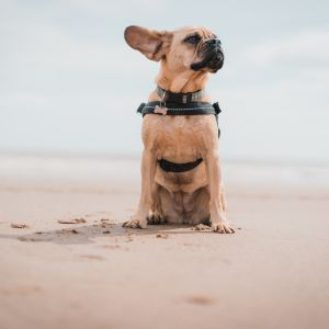 Ear Care Products for Dogs