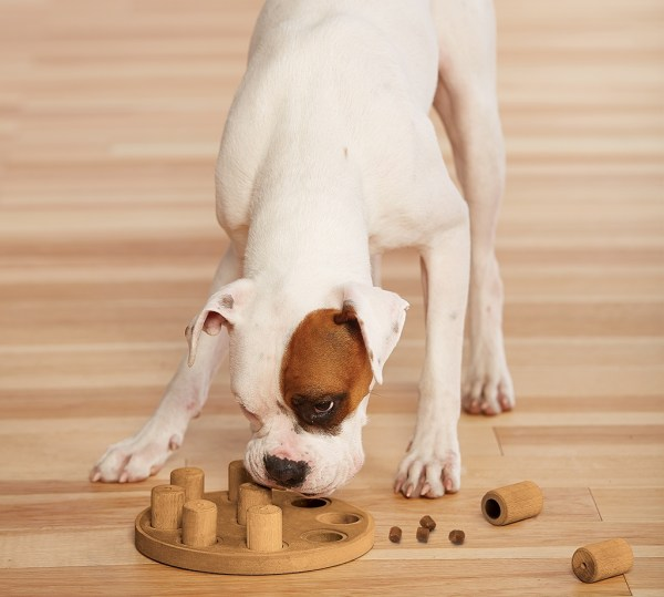 Training Toys for Dogs