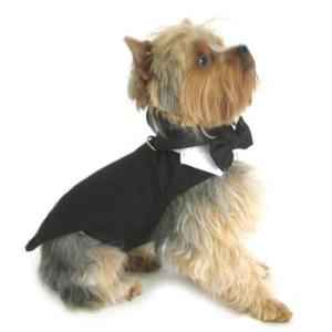 Formal Clothes for Dogs