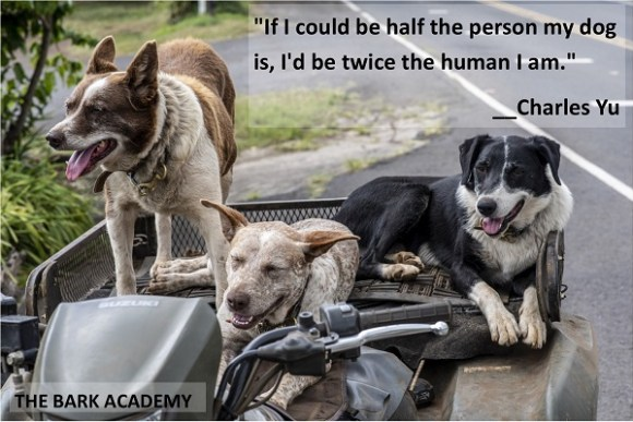 About The Bark Academy