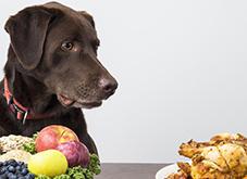 Pet Nutrition