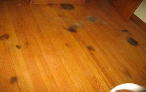 Pet stained hardwood floor
