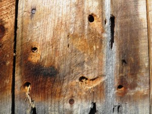 holes made by carpenter bees in wood