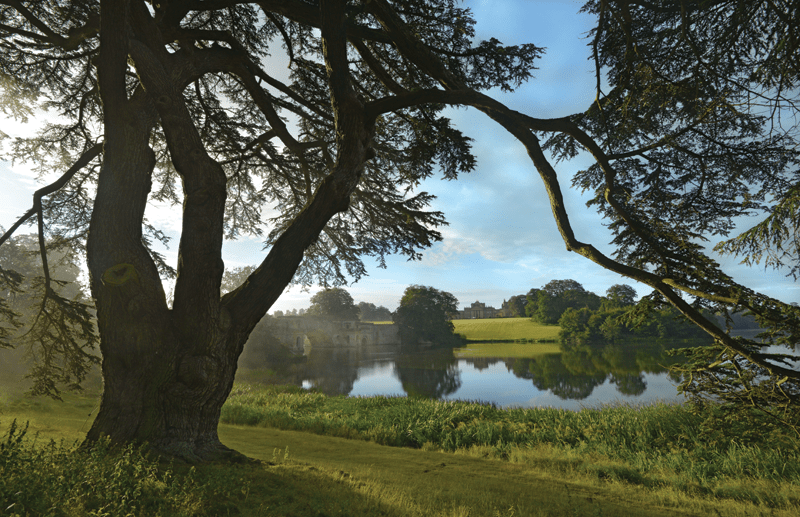 Blenheim-Palace-Harry-Potter-Tree