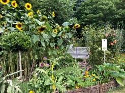 wi garden 20 july 2017 - 15