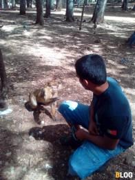 Floresta_Cedros (4)