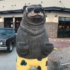 Coolest Bear in Town