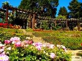 Rose Garden Berkeley