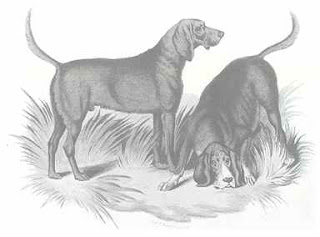 Engraving of a pair of bloodhounds, with one on the scent, nose to the ground.