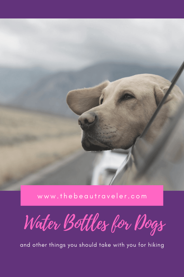 Water Bottles for Dogs When Hiking and Other Things to Take With You - The BeauTraveler