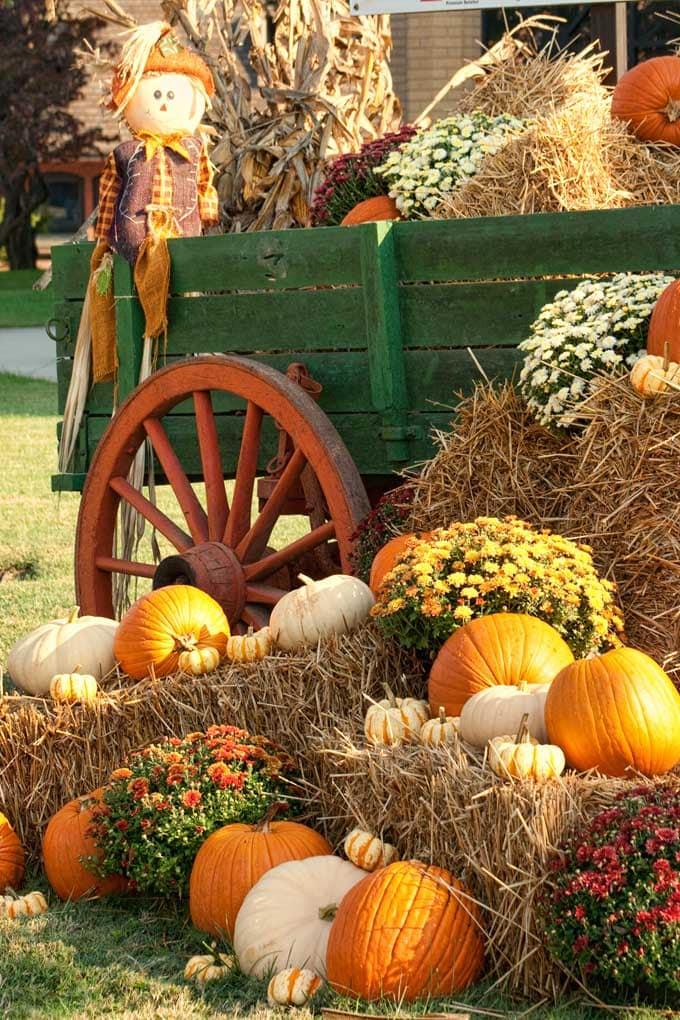 pumpkin skincare 3