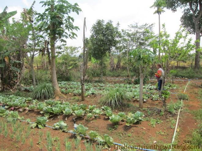 La ferme biologique de Tha Theng, plateau des Bolovens.