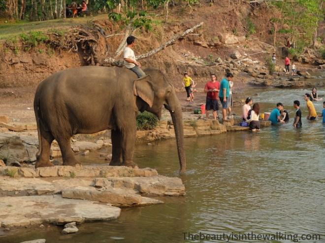7-bain elephants Tad lo