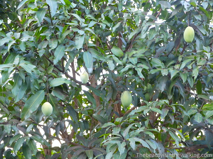 Mango And Red Kampot Pepper Three Variations The