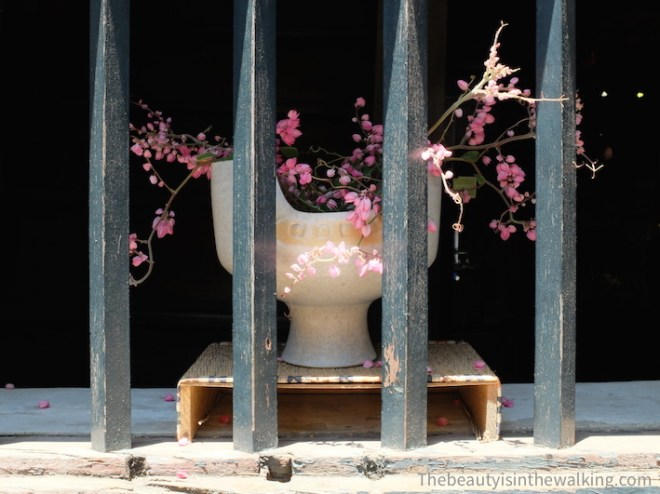 Window with flower in Hoi an
