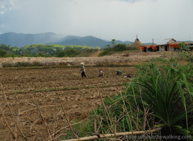 Farmers in the fields, Phong Nha