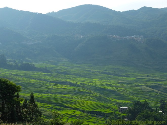 Rice field terraces - Yuanyang