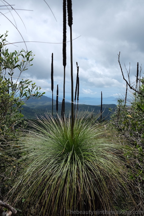 Plantes en haut de Whitsunday Peak