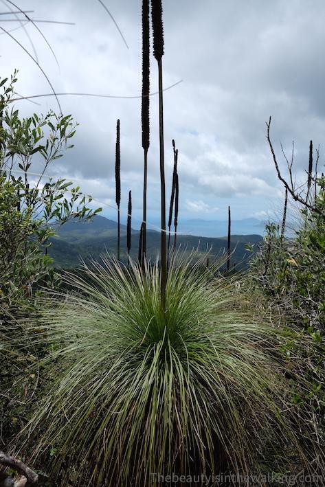 Plantes en haut de Whitsunday Peak