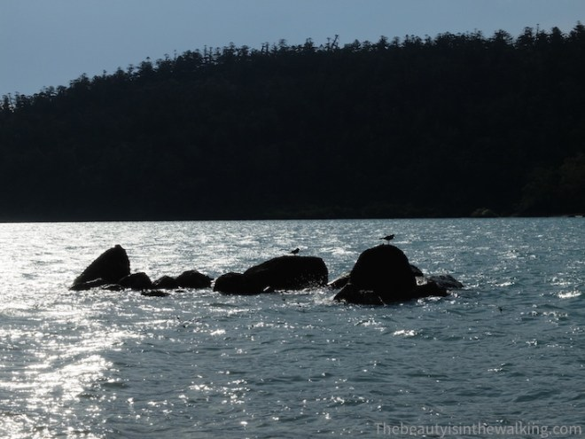 Oiseaux sur Lady Island