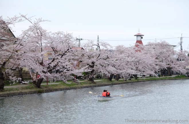 Paddle boat tour to enjoy the cherry blossom