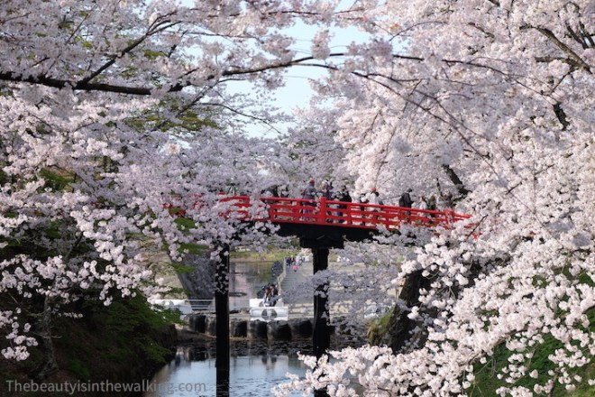 Bridge hidden by the cherry blossoms