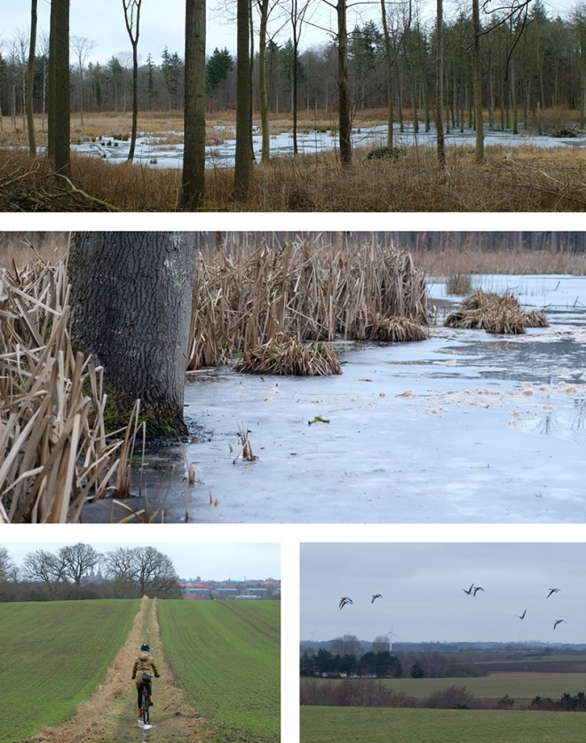Forêt de Boserup, près de Roskilde