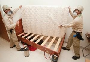 bedbug removal Indianapolis