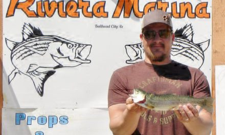 Colorado River Providing Best Bass, Stripers For Anglers