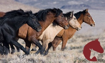 BLM Seeks Bids For New Public Off-Range Pastures For Wild Horses And Burros