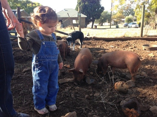 We all remember Olive right? She is my future 4-H member/cowhand in training.