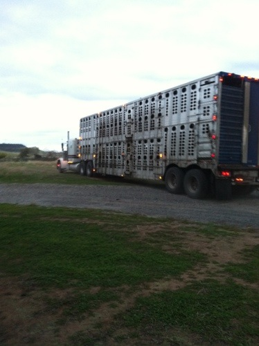 The cattle trucks we use now.